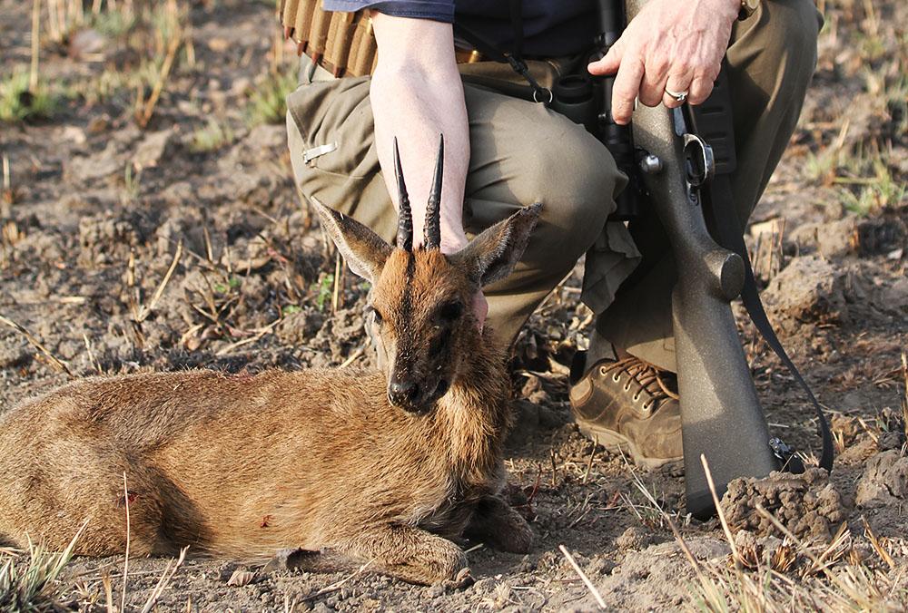 Hunting Cameroon