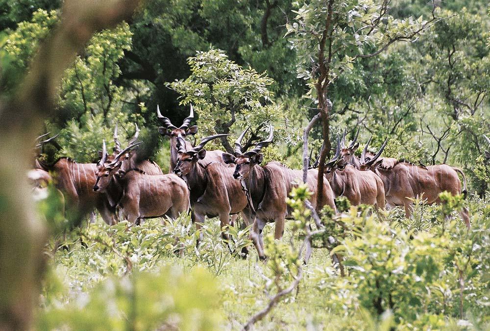 Hunting Safari Cameroon