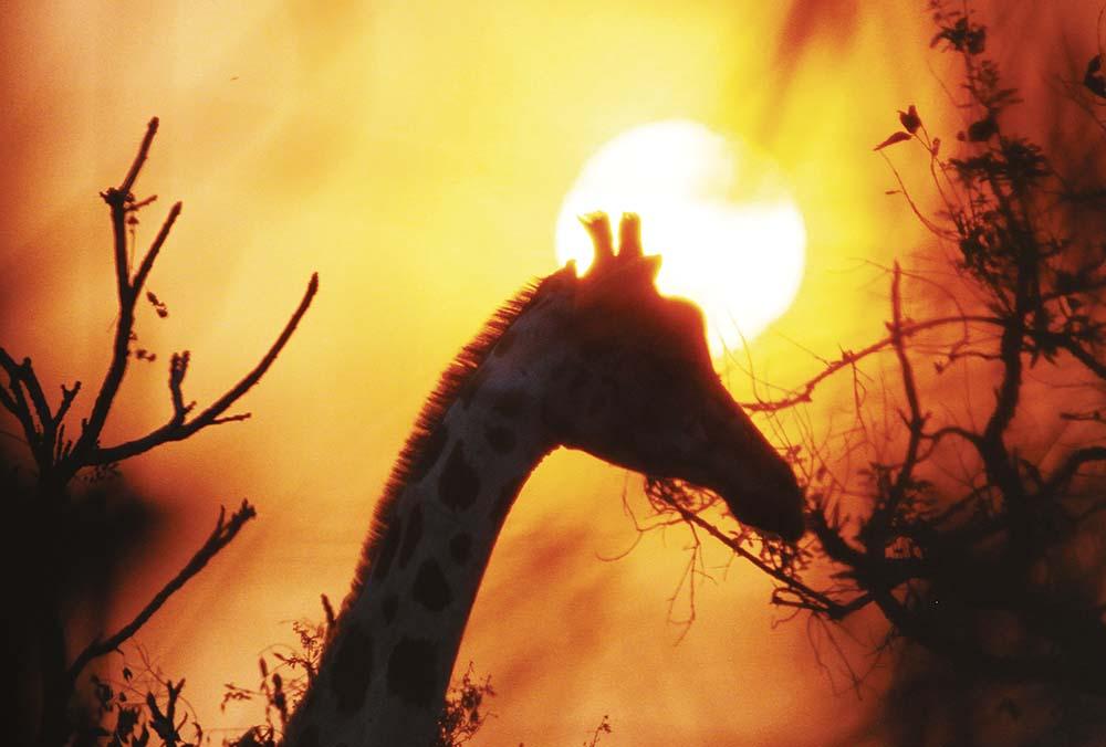 Photo Safari Cameroon