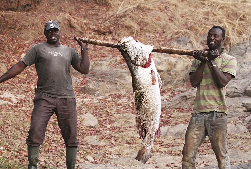 Nile Perch Cameroon