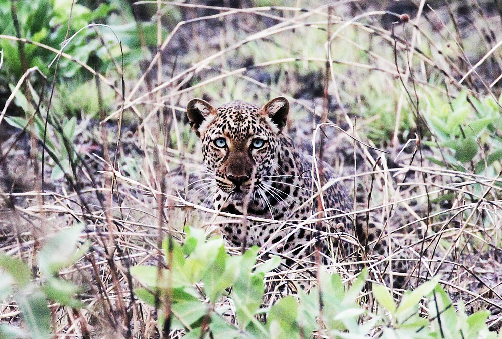 Wildlife conservation through hunting