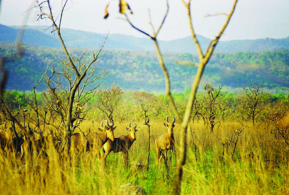 Hartebeest Hunting