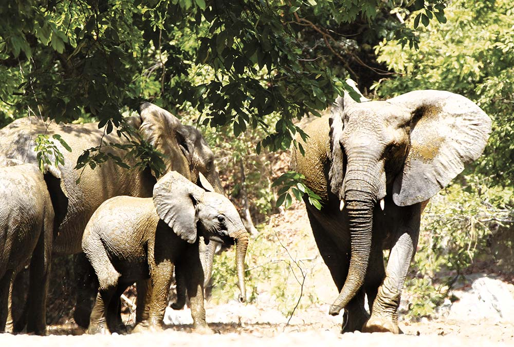 Elephant Hunting Cameroon