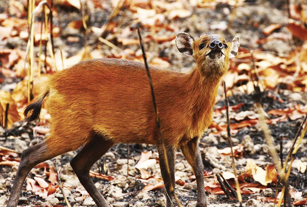 Hunting Safari Africa