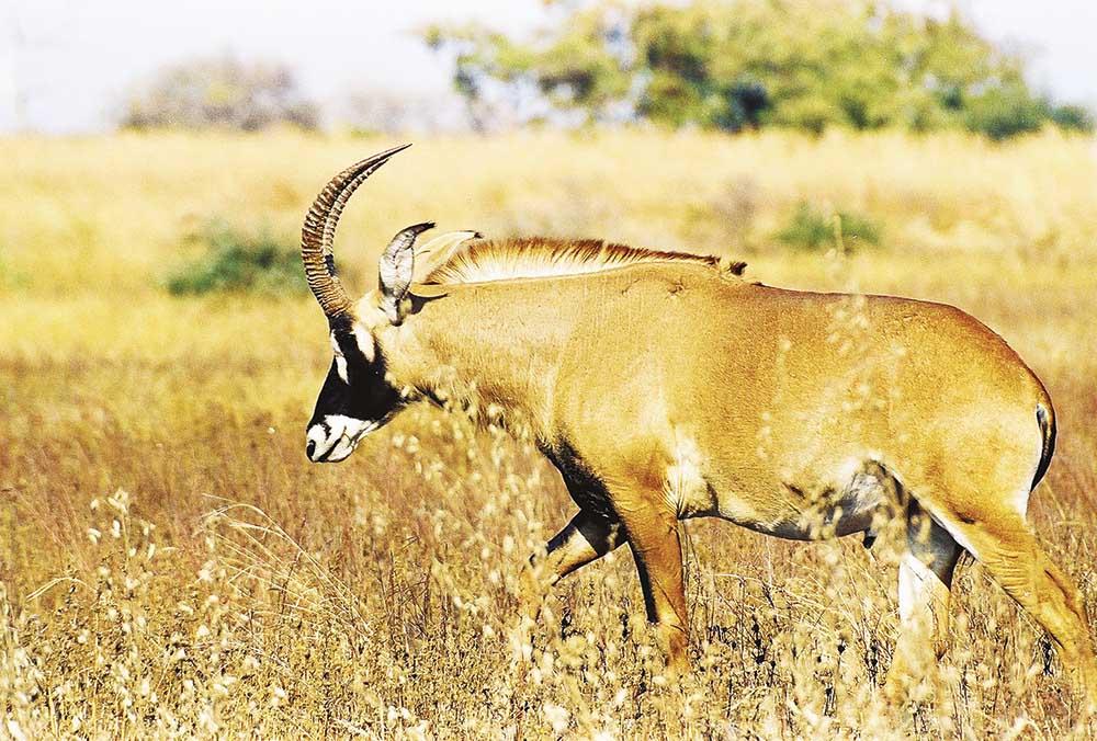 Hunting Trip Cameroon